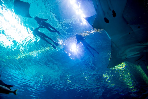 Veterans with the SHARE Military Initiative participate in a swim interaction with whale sharks at Georgia Aquarium